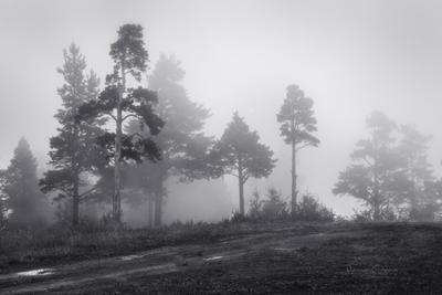 Просто природа, укутанная туманами ... туман деревья