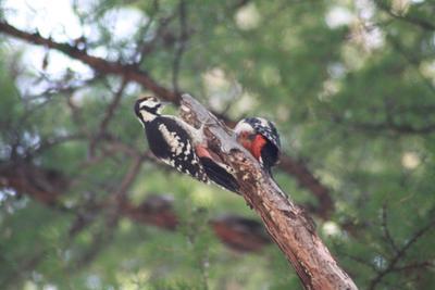 ***Первое свидание. лес птицы природа