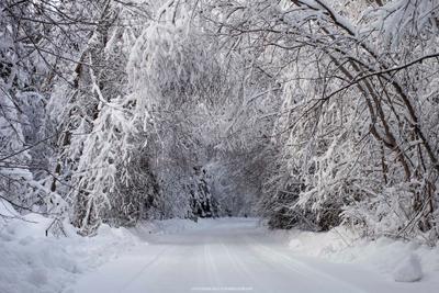 Лесной тоннель лес дорога тоннель устюжна зима