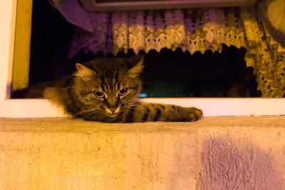 Батумский кот кот вечер Батуми Грузия