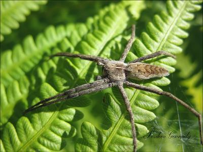Восьминог паук макро ноги папоротник солнце