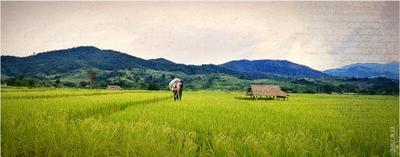 Потерянный Слон. Слон. Северный Тайланд