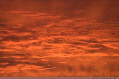 Небо на рассвете Англия Кингстон-на-Темзе рассвет небо облака птица