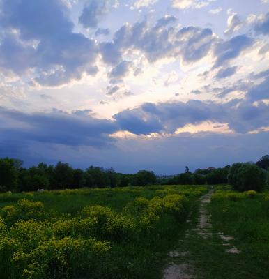 Раненое небо Небо облака цветы кусты