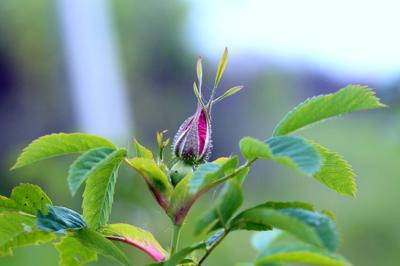 *** цветы лето