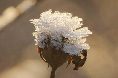 Зимний хрустальный цветок