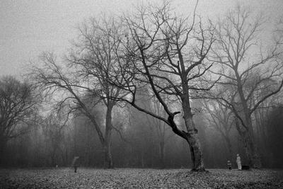 Забвение Деревья дуб туман силуэт пленка чб