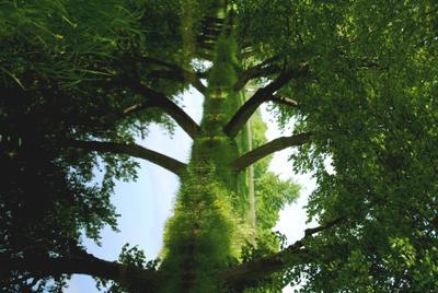 Сказочное древо иллюзия дерево зелень природа отражение фантазия сказка