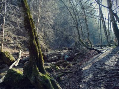 Горы Адыгеи горы Кавказ горная река лес