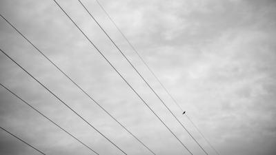 Провода mdpphoto streetphoto minimalism bird
