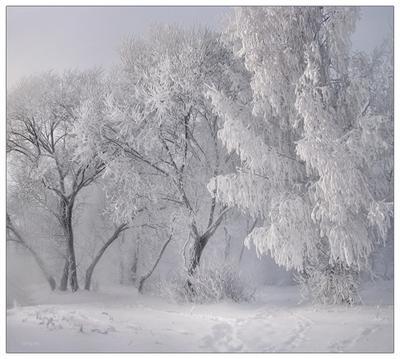 зимы...легенды... природа зима снег иней мороз деревья