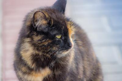 Кошка, которая гуляла сама по себе кошка улица