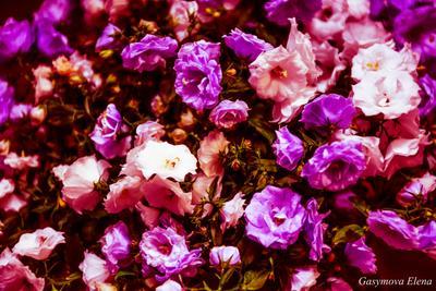 Жених и  невеста Жених и невеста цветы