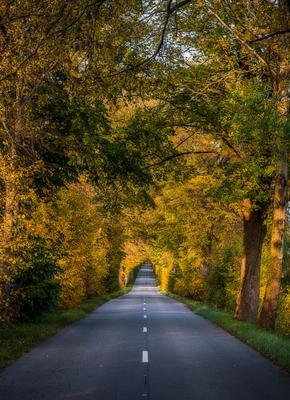 Золотой коридор Природа пейзаж дорога осень