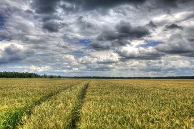 *** лето поле облака пшеница