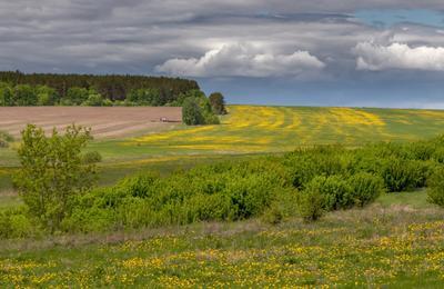 Желтые пятнышки Поле трава цветы деревья кусты лес трактор облака лето Россия глубинка