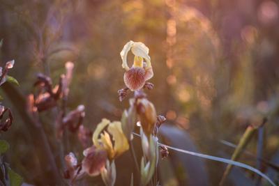 Цветы в закате