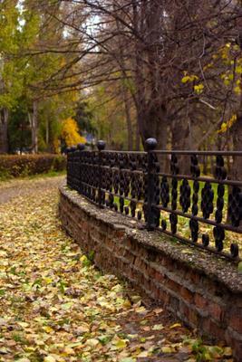 Осень осень парк аллея опавшие листья желтые