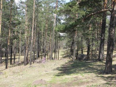 Весенний лес Лес, сосны, весна