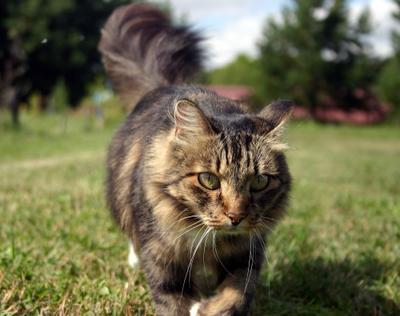 Кошка на лугу кошка зелёный луг лето прогулка