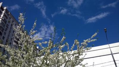Урбо-весна весна город цветущие деревья небо солнечный день