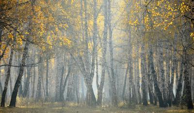 Утро в лесу Утро туман деревья осень лес