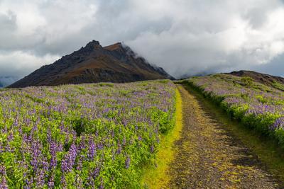 Дорога в горы Iceland