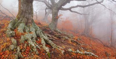 Мировое древо Демерджи лес туман дерево