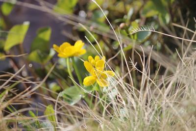 цветы на ручье