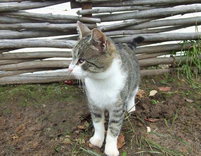 Котик Гоша Коты Животные Деревня