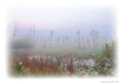 Туман на болоте ночь, туман, болото, пейзаж