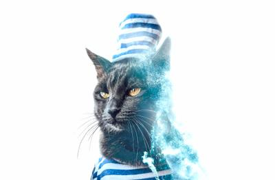 морской кот beautiful cat funny fur head background animal look kitten feline hair mammal paw kitty colorful pet wallpaper young adorable white summer portrait cute furry stylish happy domestic fluffy little color charming colourful house lady people love striped vie