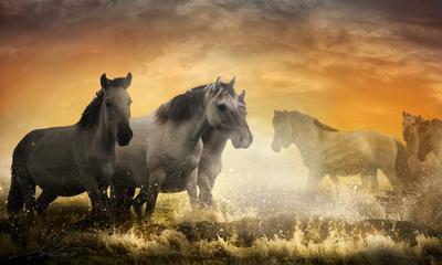 Wild II Digital Photo Art Wild Horses Eltons Fantasies