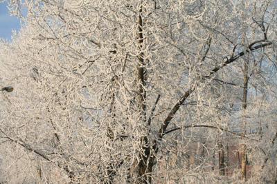 Мороз и солнце иней снег зима