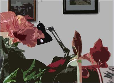 Цветы дома. Фильтр Cutuot