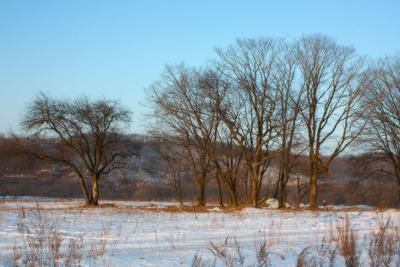 Просто деревья деревья