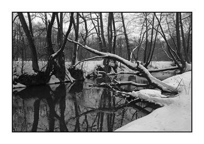 Птичь. река  зима  пейзаж  деревья  снег  сугробы  вода  графика