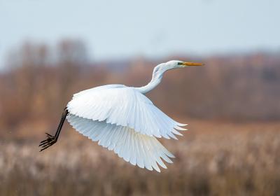 Царица озера птицы природа зима весна лес