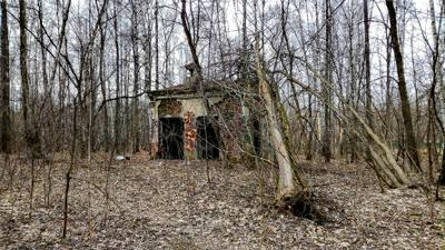ИЗБУШКА Москва лесопарк Лосиный остров