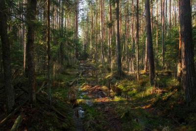 """Лесные """"джунгли"""" в феврале"""
