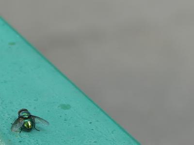 Портрет зелёной мухи в зелёном углу.