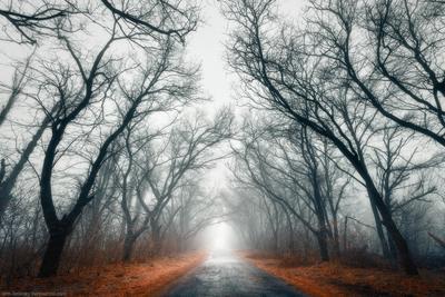 Туман на Хортице пейзаж украина зима хортица лес туман деревья