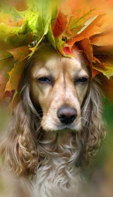 Венецианская осень спаниель осень