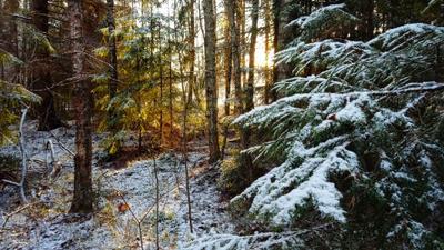 Морозное утро в лесу лес зима мороз утро