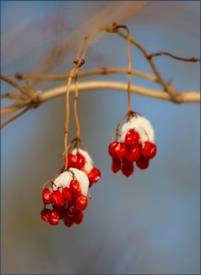 Снег на ягодах.