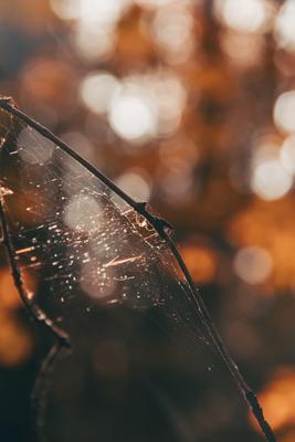 Паук Осень паук паутина ветка
