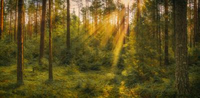Утро в лесу Урал лес панорама рассвет солнечные лучи