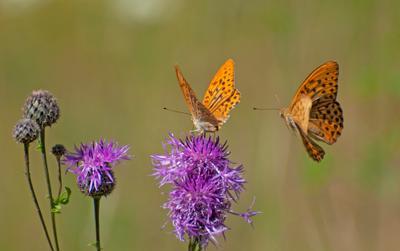 Сладкое место бабочка лето