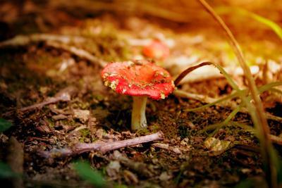 Немного о любви к теплу гриб