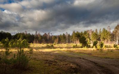 Псковская сторона Псков лес осень тучи небо поле свет ели